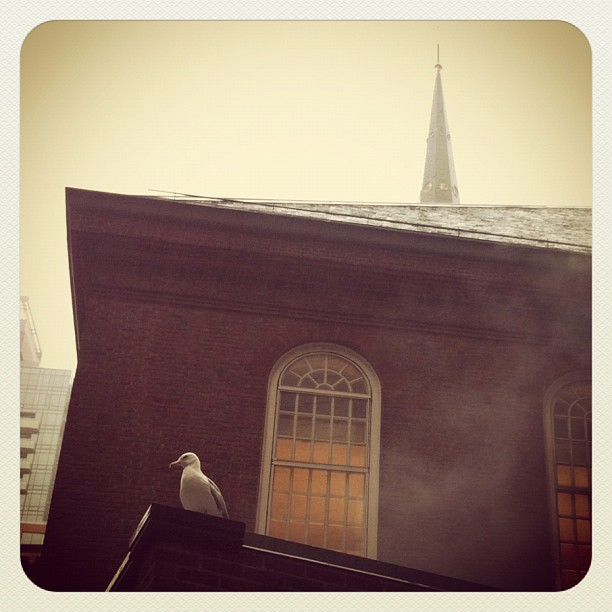 Boston Bird Gisele #dogonpremise #boston #old south meeting house (Taken with  Instagram  at Old South Meeting House)