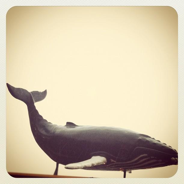 Whale Up Thar, Boston Hawbah. #instagram #iphoneonly #iphonesia #iphone4 #dogonpremise #boston #bostonharbor #whale #mannequin #aquarium  (Taken with  Instagram  at New England Aquarium Whale Watch)