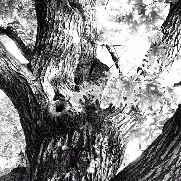 Trees of Macri Park Series No.76, Brooklyn NY (Taken with  Instagram  at Macri Triangle)