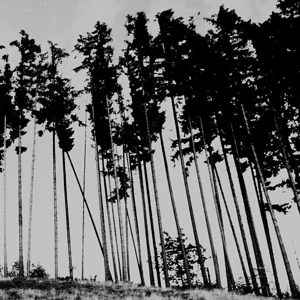 Tree Lines, Outside of Centralia, WA (Taken with  Instagram )