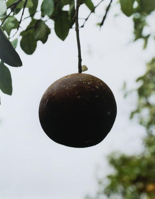 Roe Ethridge, Orange Grove #7