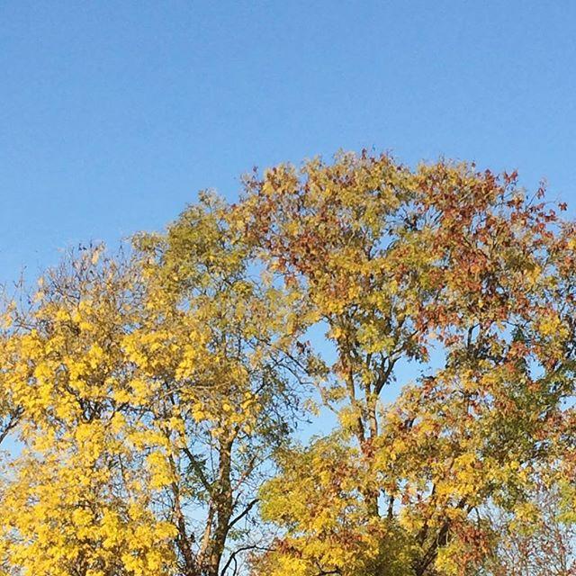 Autumn is definitely here 🍂 #autumnshere #autumnleaves #crispmorning #bluesky