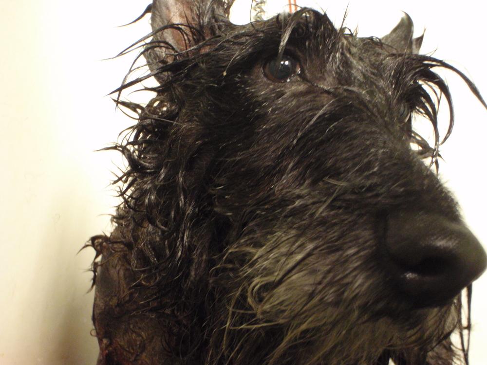 indy bath.JPG