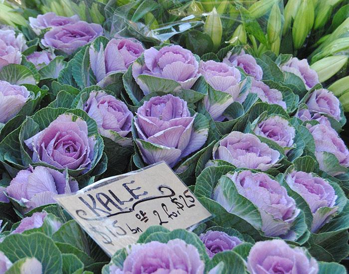 Fresh Cut Flowers - Fourth Village Waterloo Danks St