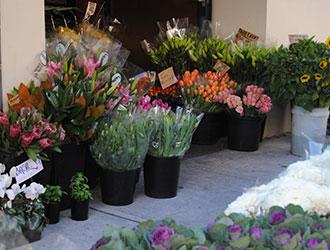Fresh Market Flowers Fourth Village Mosman