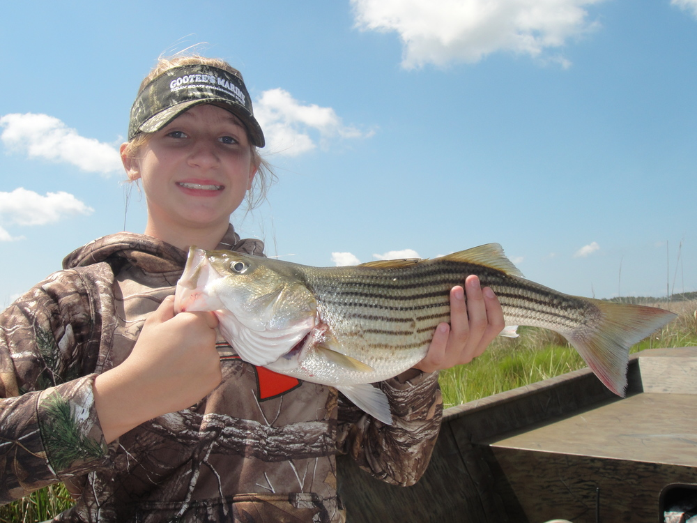 A 21 inch rockfish from the back creeks.  June 7, 2015