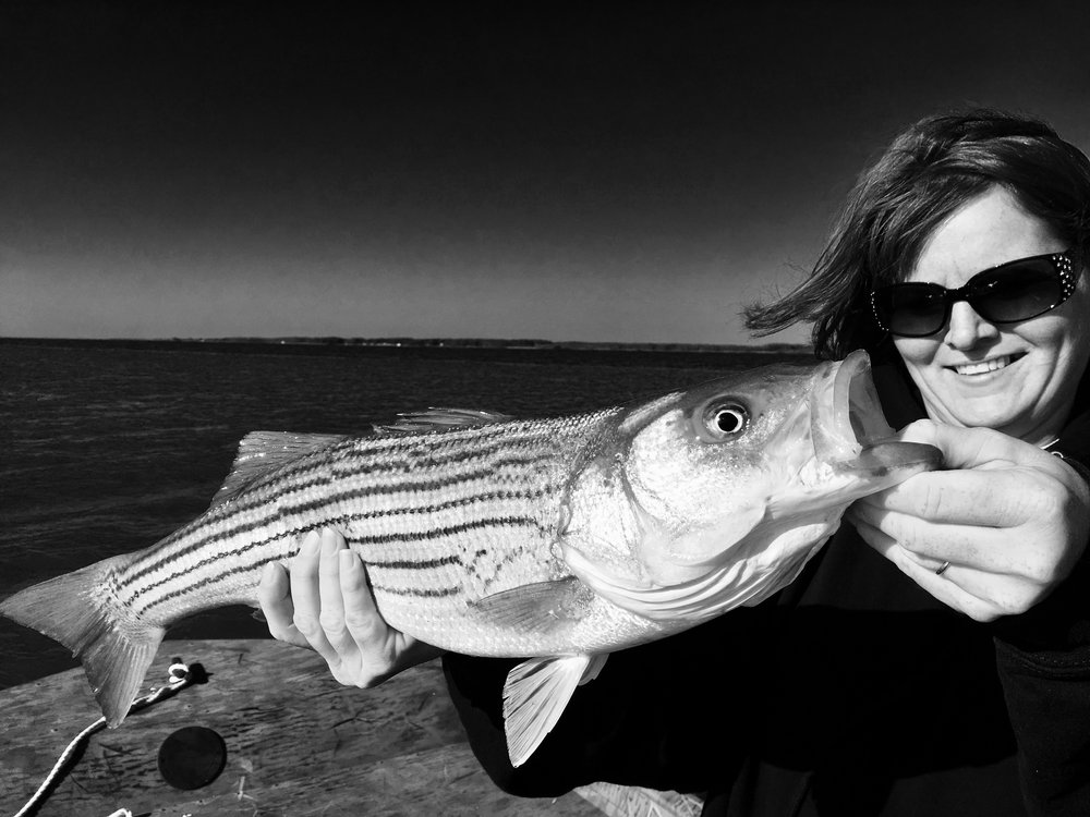 Working the shorelines for stripers.