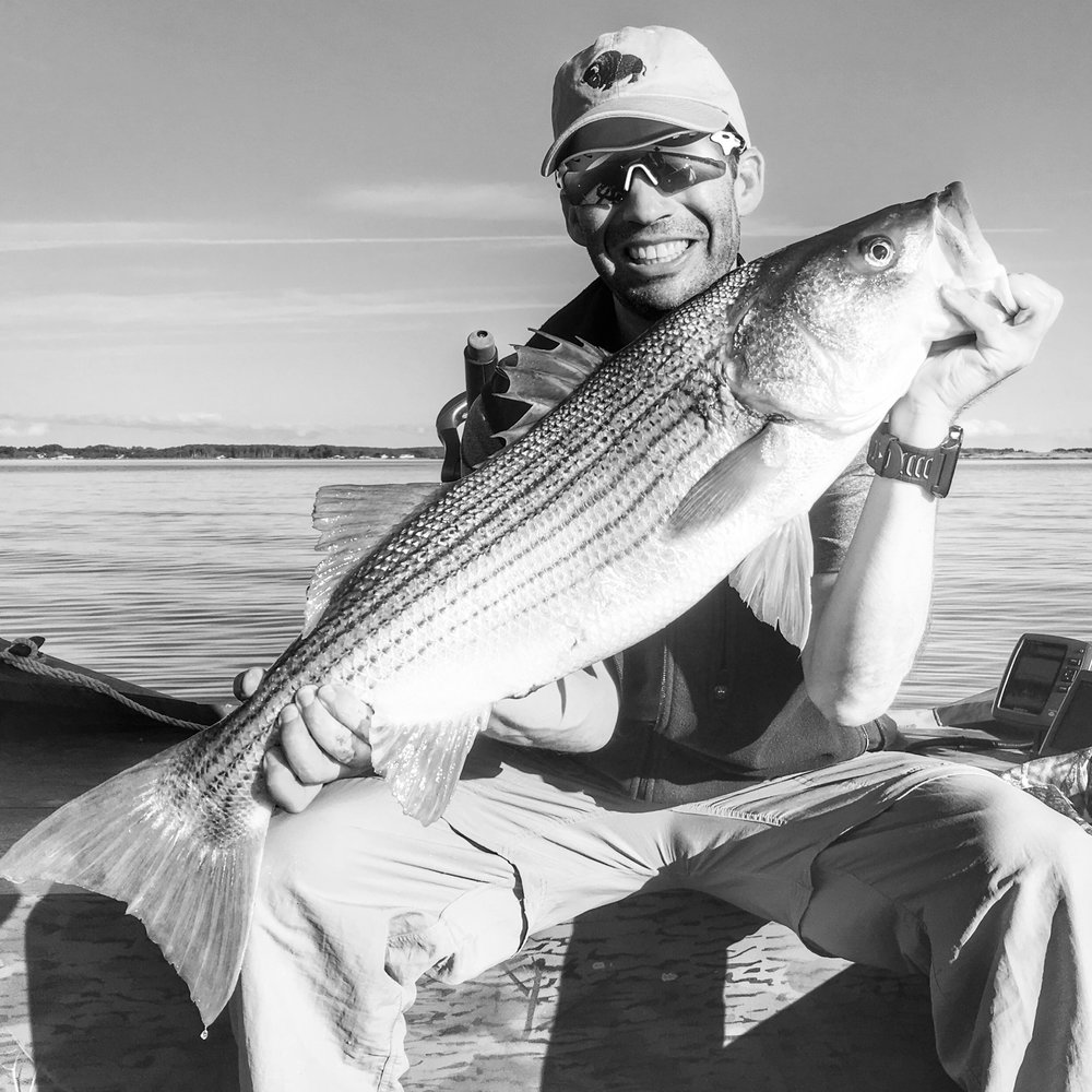 Nice stripers working the shallows. #catch&release