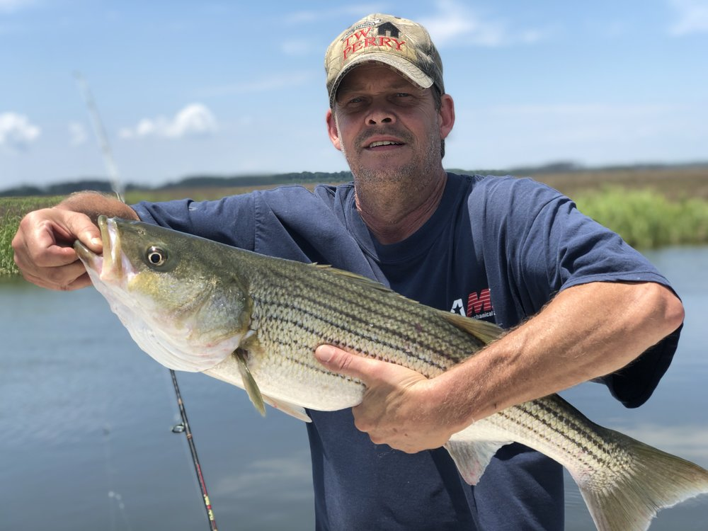 """We have had a busy week catching nice 28"""" striped bass, average 20"""" to 30"""" in these areas, along with some nice perch. I do not usually post fishing pics - but this one is for the doubters."""