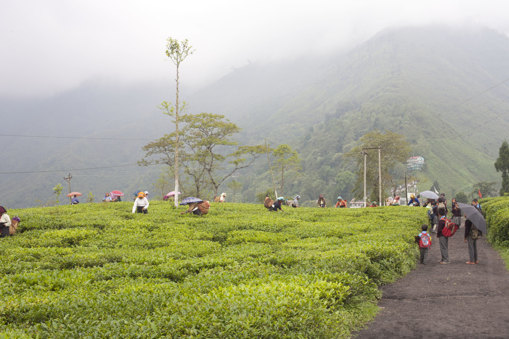 Darjeeling district, India