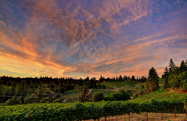 Boeger_Winery2.jpg