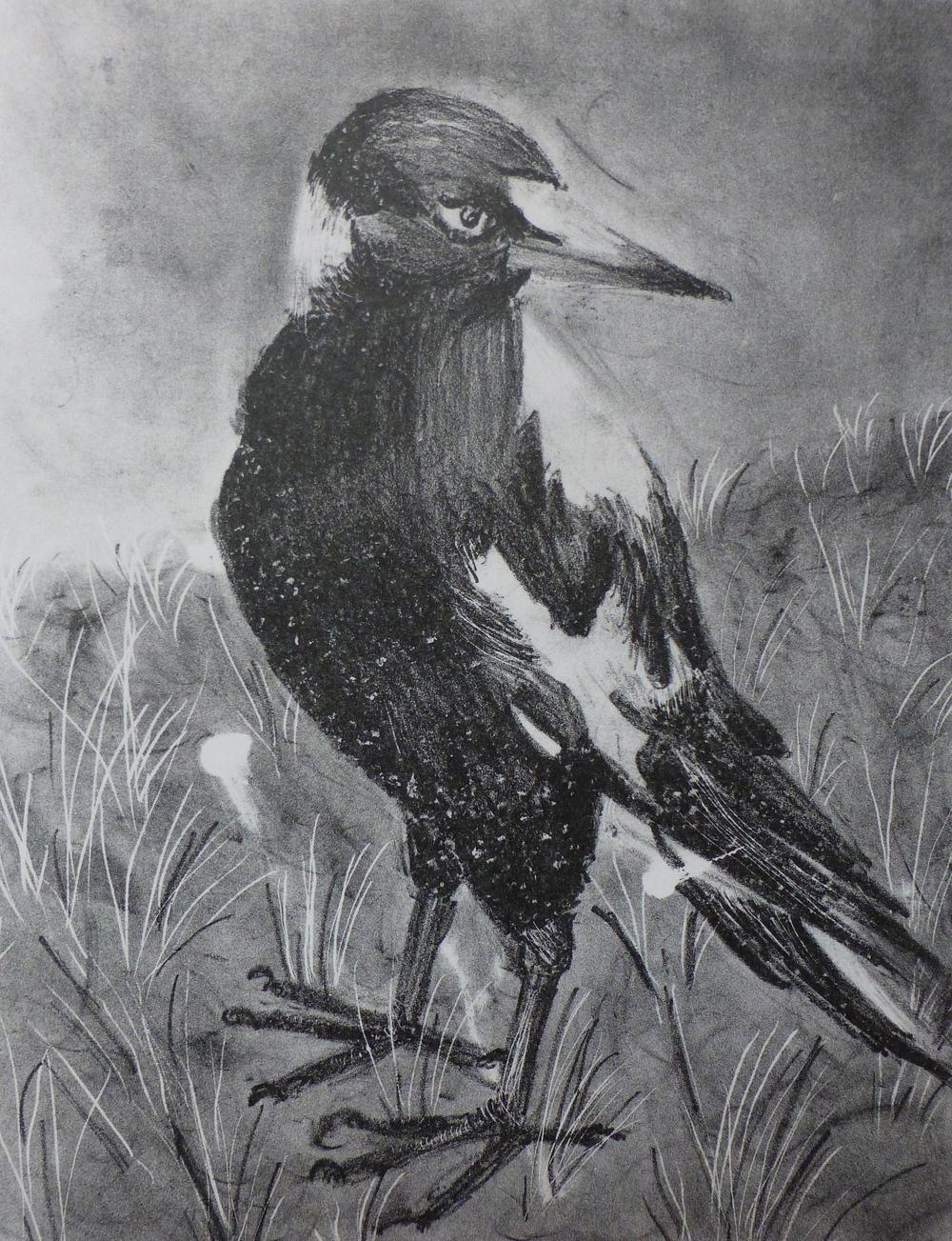 Magpie   Lithograph, 2011  Edition of 4  Image size: 27 cm x 21 cm  Paper size: 38 cm x 29 cm  $100