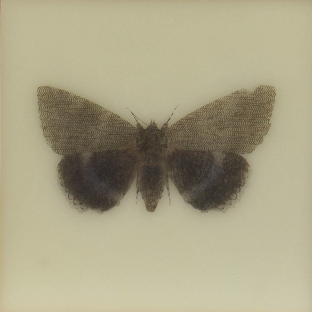 Paper Wings Nonpareil ,  2015  Encaustic on panel 6 in. x 6 in.