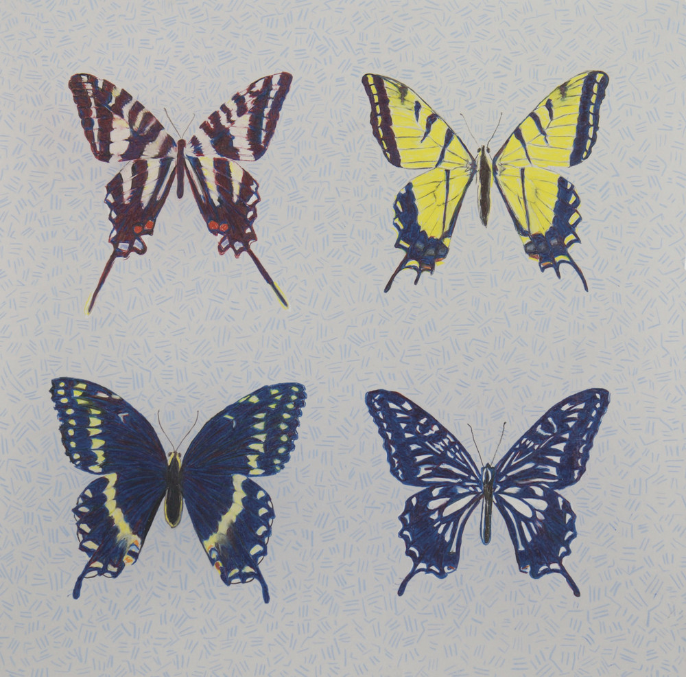 Swallowtails   2015 Prismacolor on Dura-lar 20 in. x 20 in.