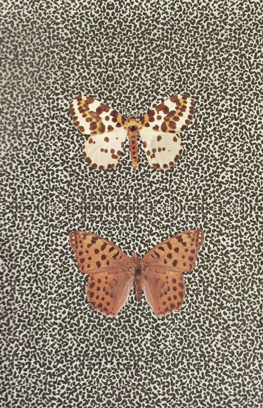 Envelope and Fritillary ,  2015  Collage 5 in. x 3 in.