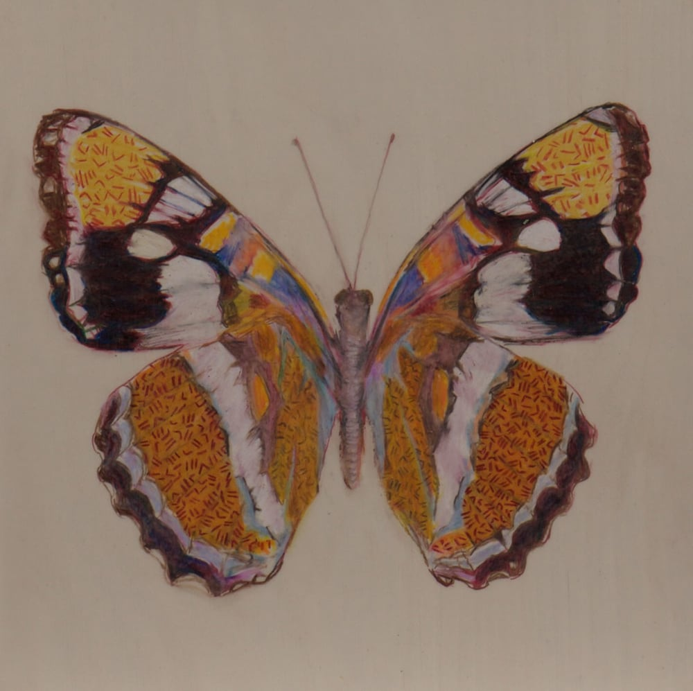 Wing Print ,  2015  Prismacolor on Dura-lar on wood 6 in. x 6 in.