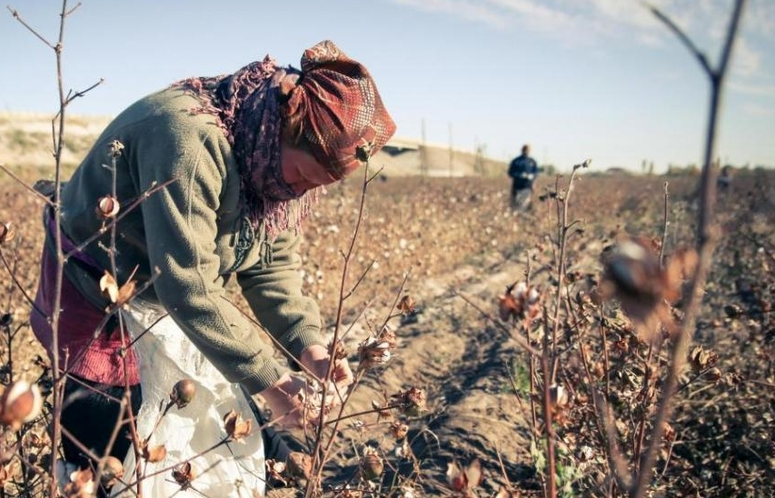 Cotton Agriculture - This research is in very early stages, and is broadly concerned with the ways that cotton agroindustrialism has reshaped human and non-human genomes through shifting racial contexts of exploitative labor in the American South.Ranging from slave labor, to tenant farming and sharecropping of the early 20th century, to the migrant laborers of today, cotton farming has had different levels of impact on a variety of communities that may have contributed to biological disparities that we see today.In this project, I will reconstruct the epigenetic effects of exploitative labor practices across the cotton belt of the American South, especially Texas, which remains one of the world's primary cotton producers. In addition to understanding how these practices may have reshaped the genomes of people, this project also seeks to understand the more-than-human aspects of cotton agroindustrialism, and looks at how the cotton genome itself has also been remade by genetic modification. In doing so,this project seeks to understand the ways that colonialism has been simultaneously scripted onto the human and more-than-human world.