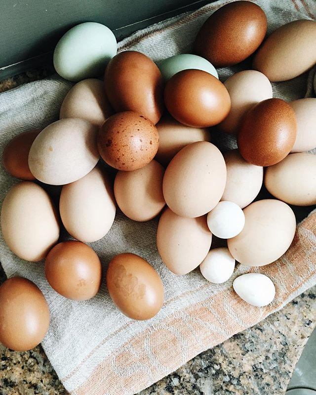 Those perfect farm eggs 😍 What should I make with these lovelies??