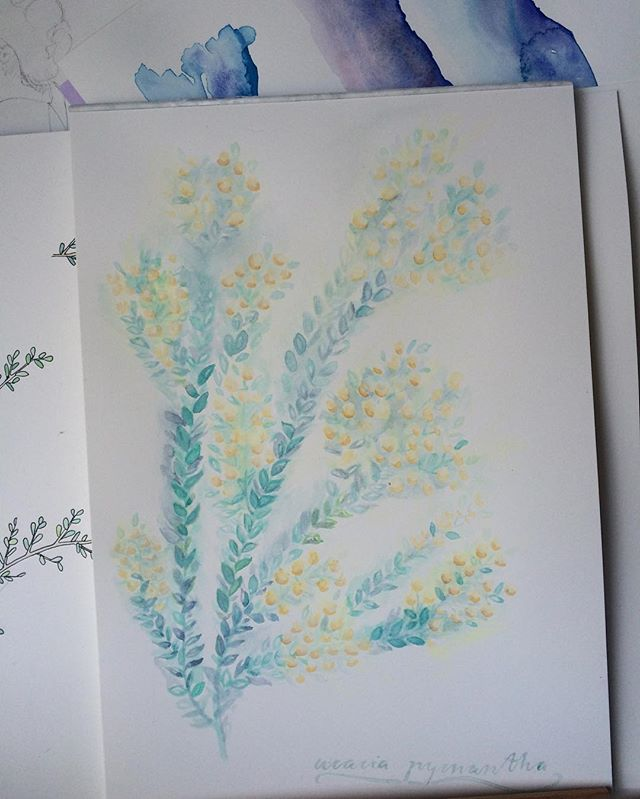 Wedding gift commission finished - an acacia pycnantha or golden wattle for an Australian living abroad 🌼