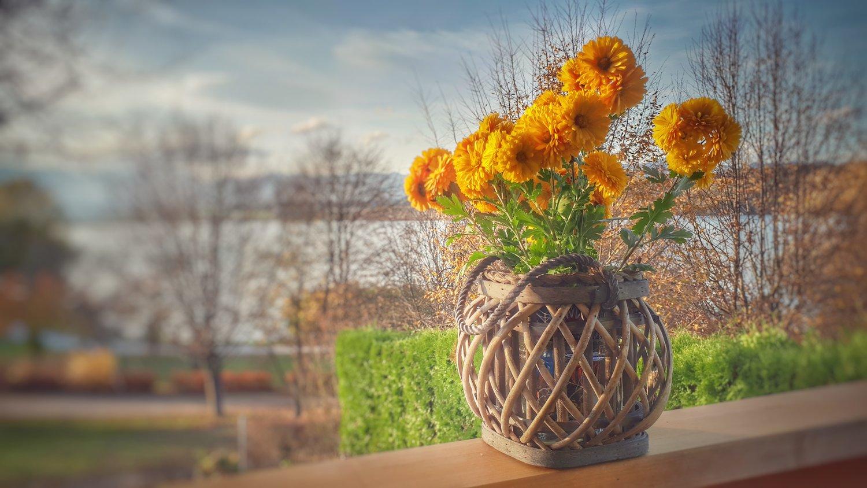 Fall Gardening Tips Conrex