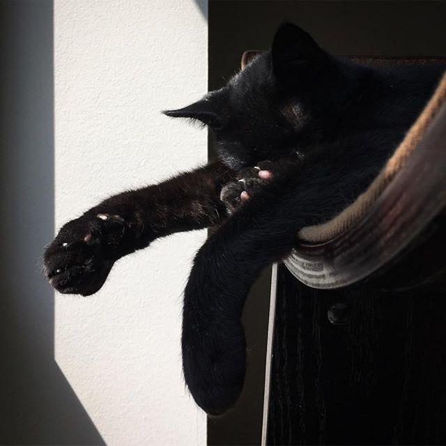 Sleeping City Kitty, 2017 #citykitty #chitown #blackcat #cat