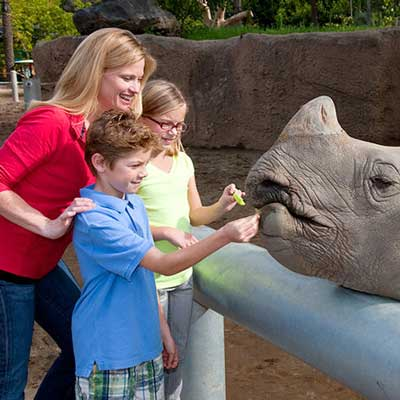 Feeding rhino at San Diego Zoo