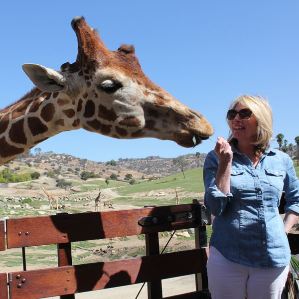 Feed giraffes and rhinos at the San Diego Safari Park.