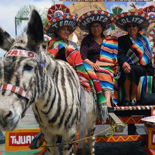 That's a zebra?  In Tijuana it is.