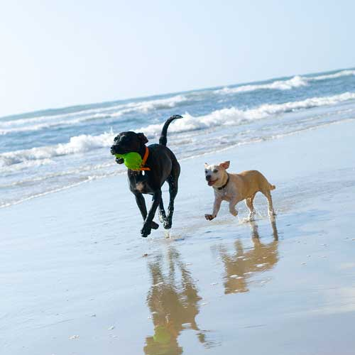 Dog lovers (and dogs) love running on our beaches in San Diego.