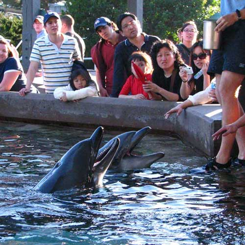 Pet a dolphin at SeaWorld