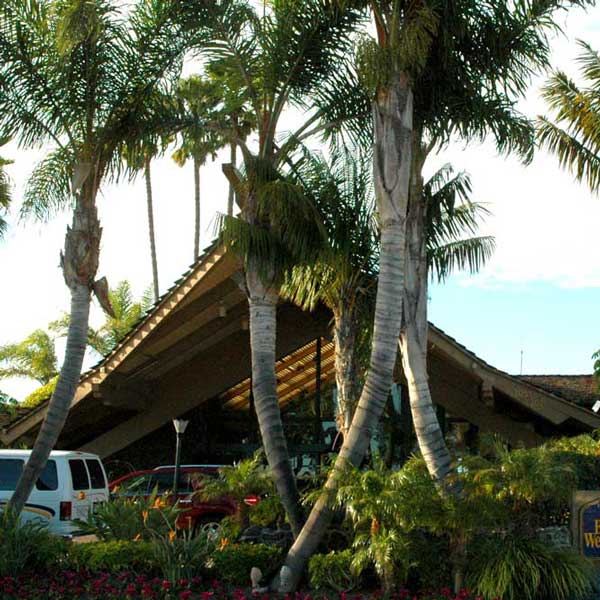 Tropical paradise on a budget? Yes, at Best Western's Island Palms on Shelter Island.