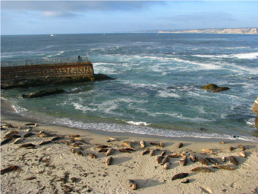 Seals doing what comes naturally in San Diego