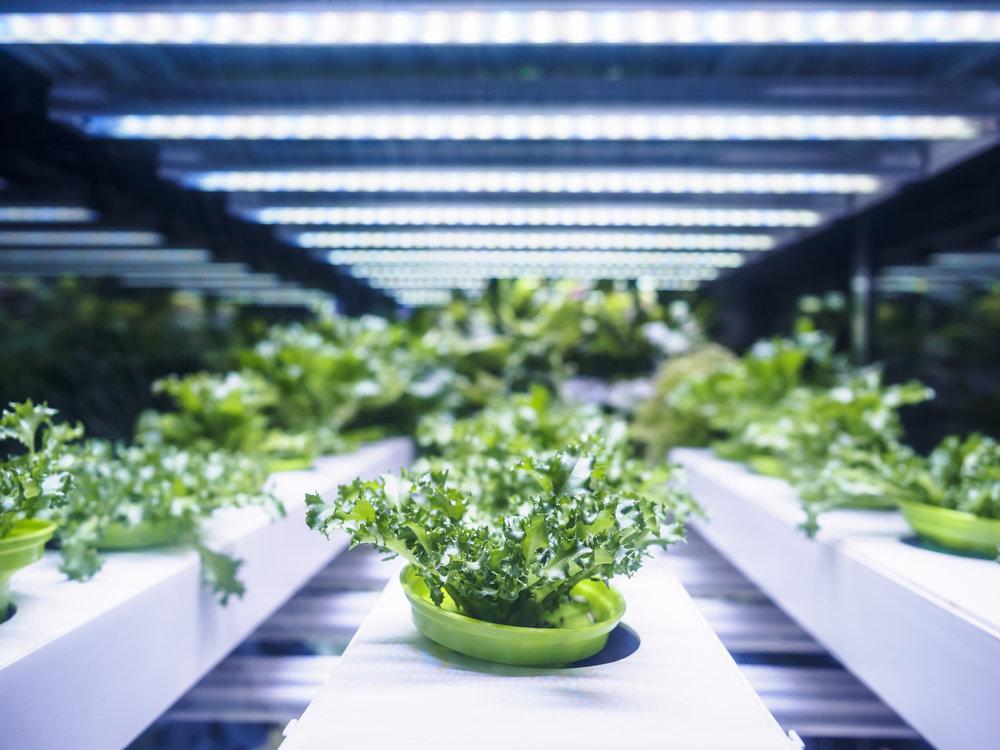 AdobeStock_120159859-lettuce.jpeg
