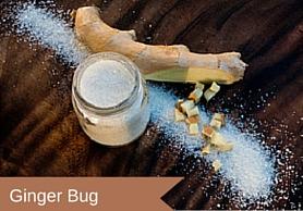 Ginger Bug Title.jpg