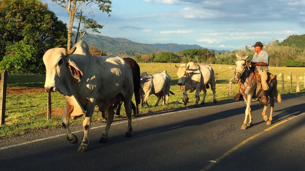 Costa Rica Digerati Media