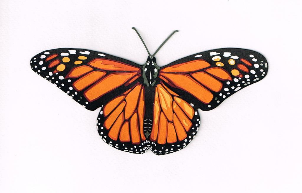 44fdd6aa8398 My daughter loves butterflies and tarantulas. — Matthew Dicks