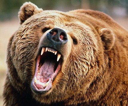mean bear.jpg