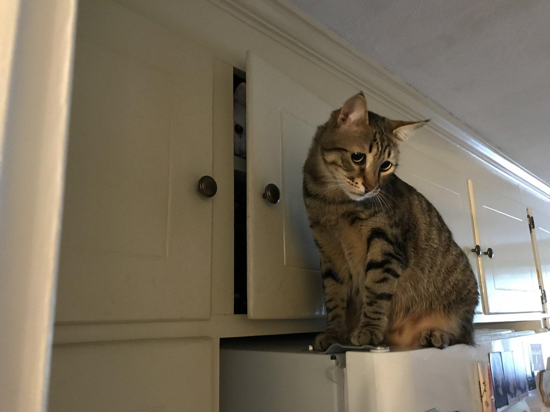 7044a3f4bae Get a cat — Matthew Dicks