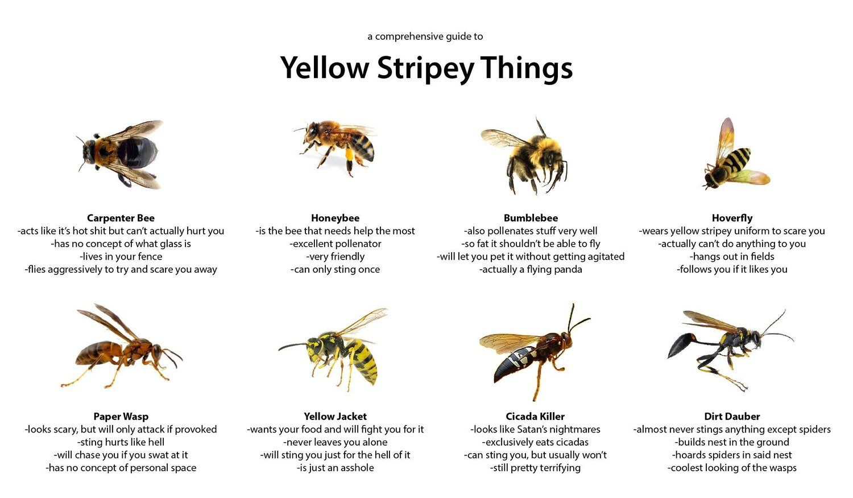 57e8328e6e2 Yellow Stripey Things — Matthew Dicks
