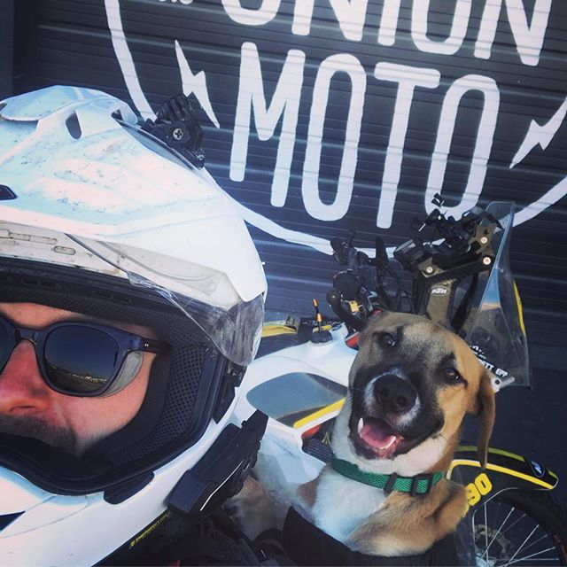 New shop dog SeeSee likes her new #k9sportsack to go on adventure rides with dad.  Taking adventure dog to the next level. . . . . #adventuredog #adventuredogs #adventurebike #hickoryunionmoto #ktm690enduro #shoeihelmets #ktm