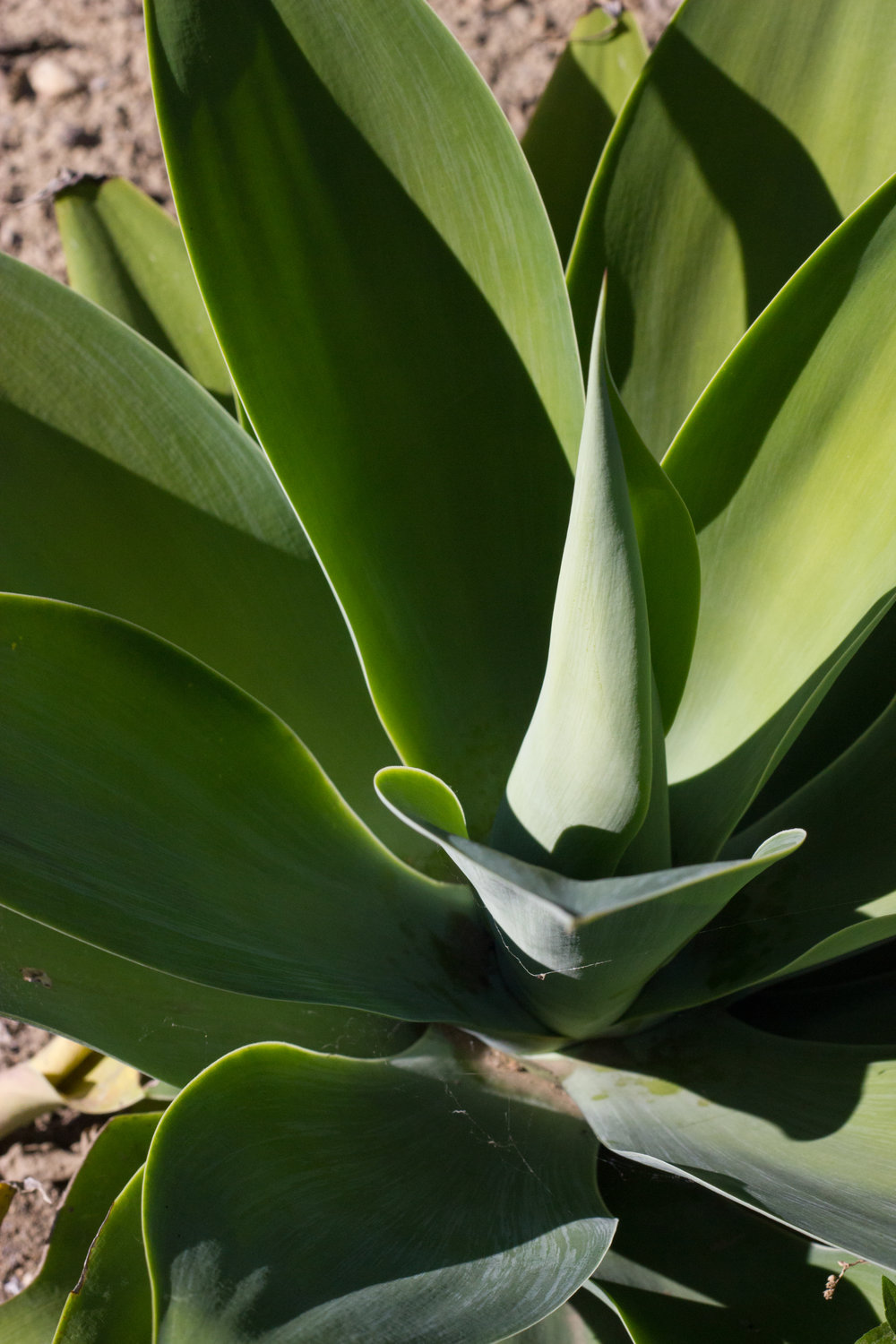 agave shapes by leah pellegrini for thread caravan.jpg