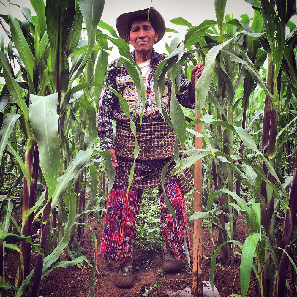 solola corn farmer in traje by luna zorro thread caravan.jpg