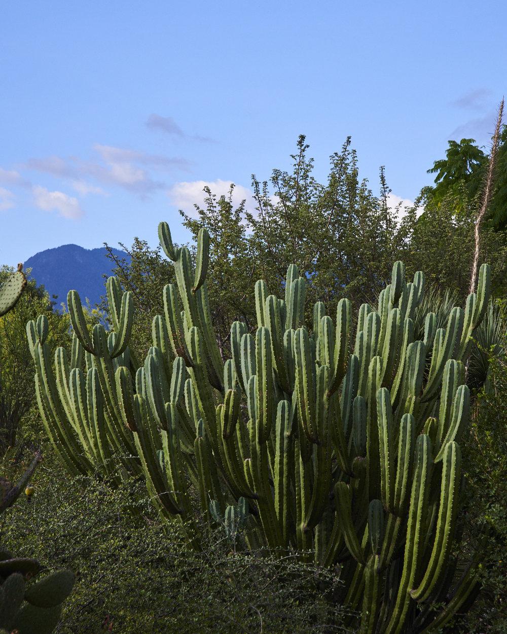 oaxacan cacti botanical gardens by kyle dorosz thread caravan.jpg