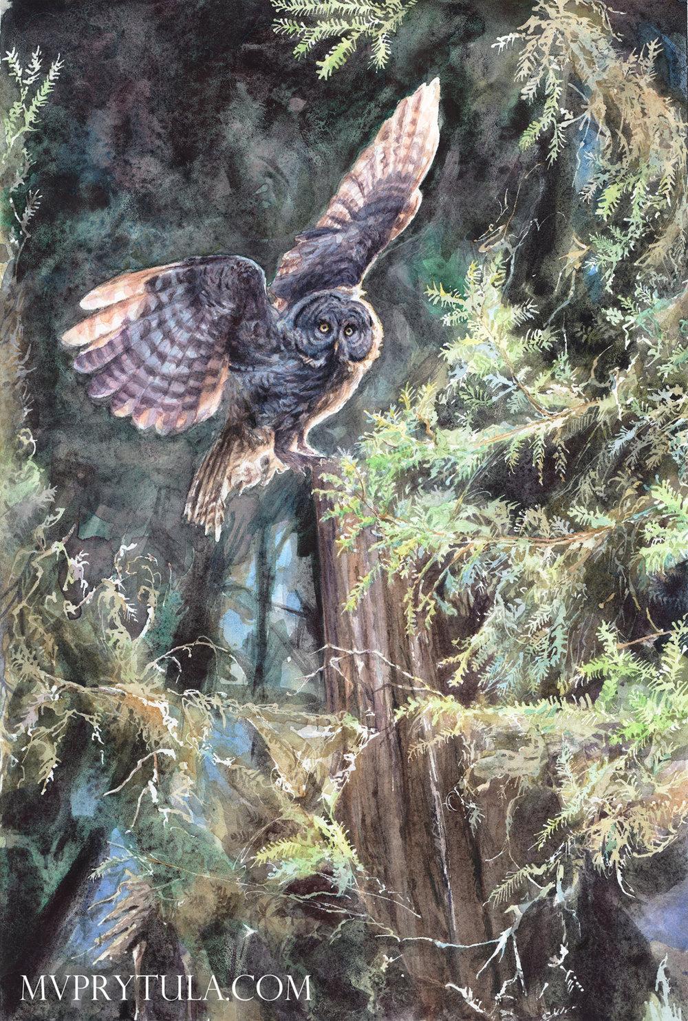 birdwhisperer_owl_sig.jpg