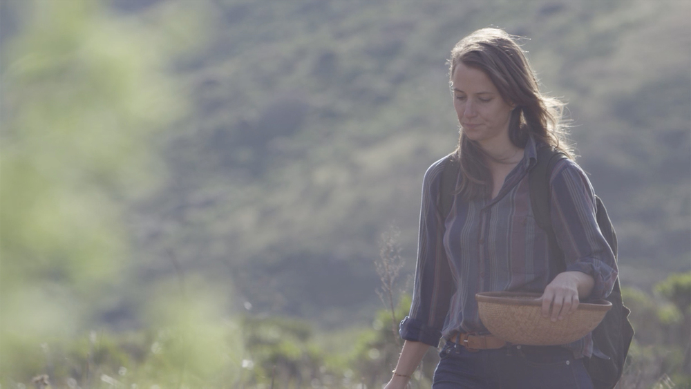 #004 Elderflower Cordial | Halley Roberts