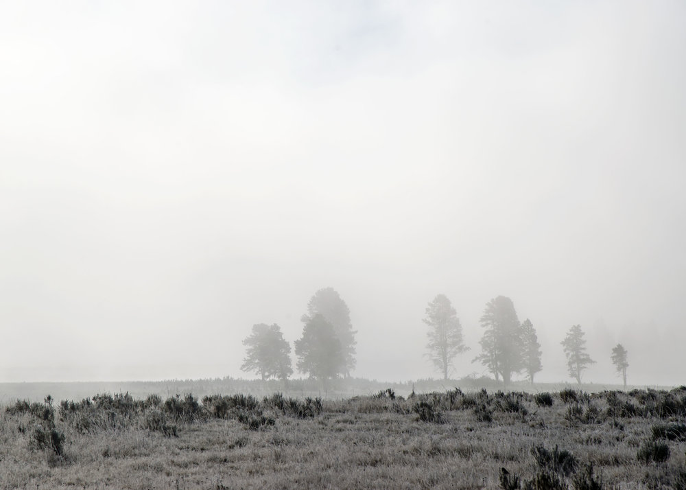 Frost covers the scrub as fog fills the Yellowstone River Valley yielding a monochromatic landscape.  Nikon D800, Nikkor 24-120mm lens @ 120mm, ISO 200, f8, 1/1600 sec.