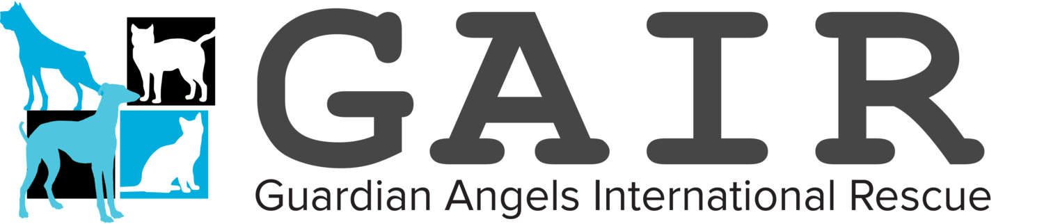 Guardian Angels International Rescue