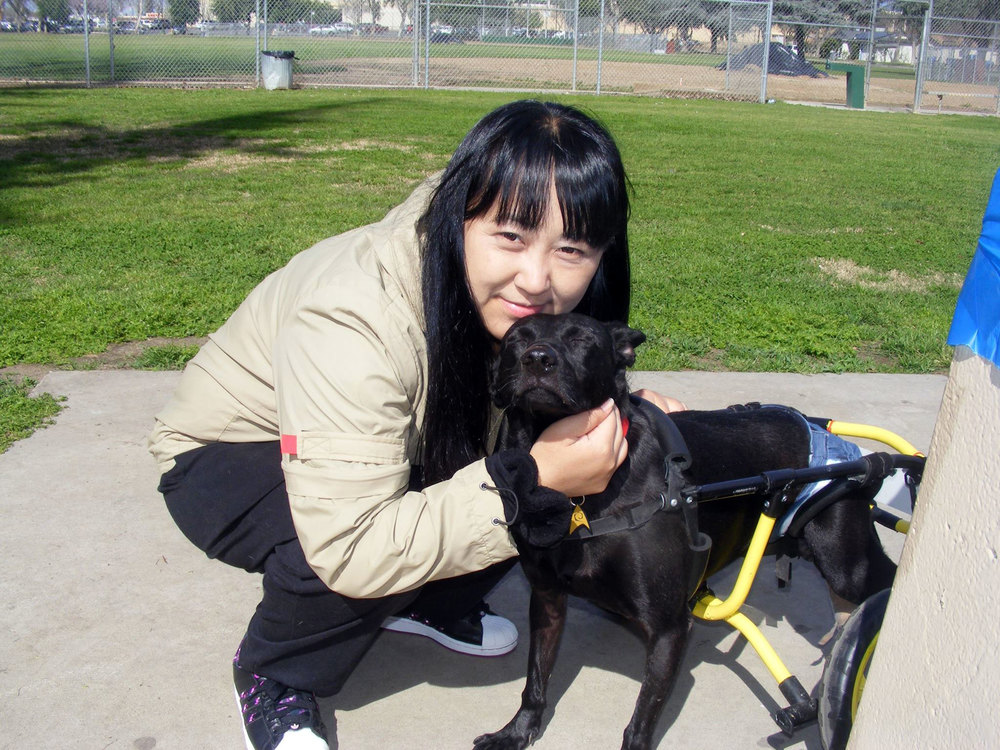 Yenchi reuniteswith Batman, her first paralyzed rescue and her first rescued dogsent to the US for adoption