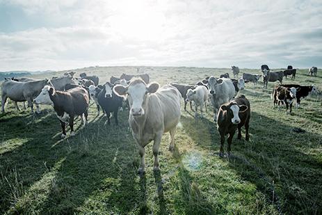 tierarztpraxis_roentgenstrasse-nutztiere-bestandskontrolle.jpg
