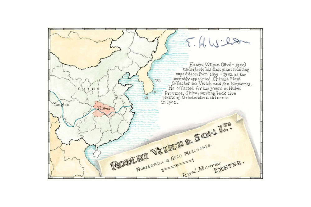 Borde Hill Plant Histories, 2012, pen & ink with watercolour,  map of E. H. Wilson's plant hunting expedition to China in 1899 - 1902